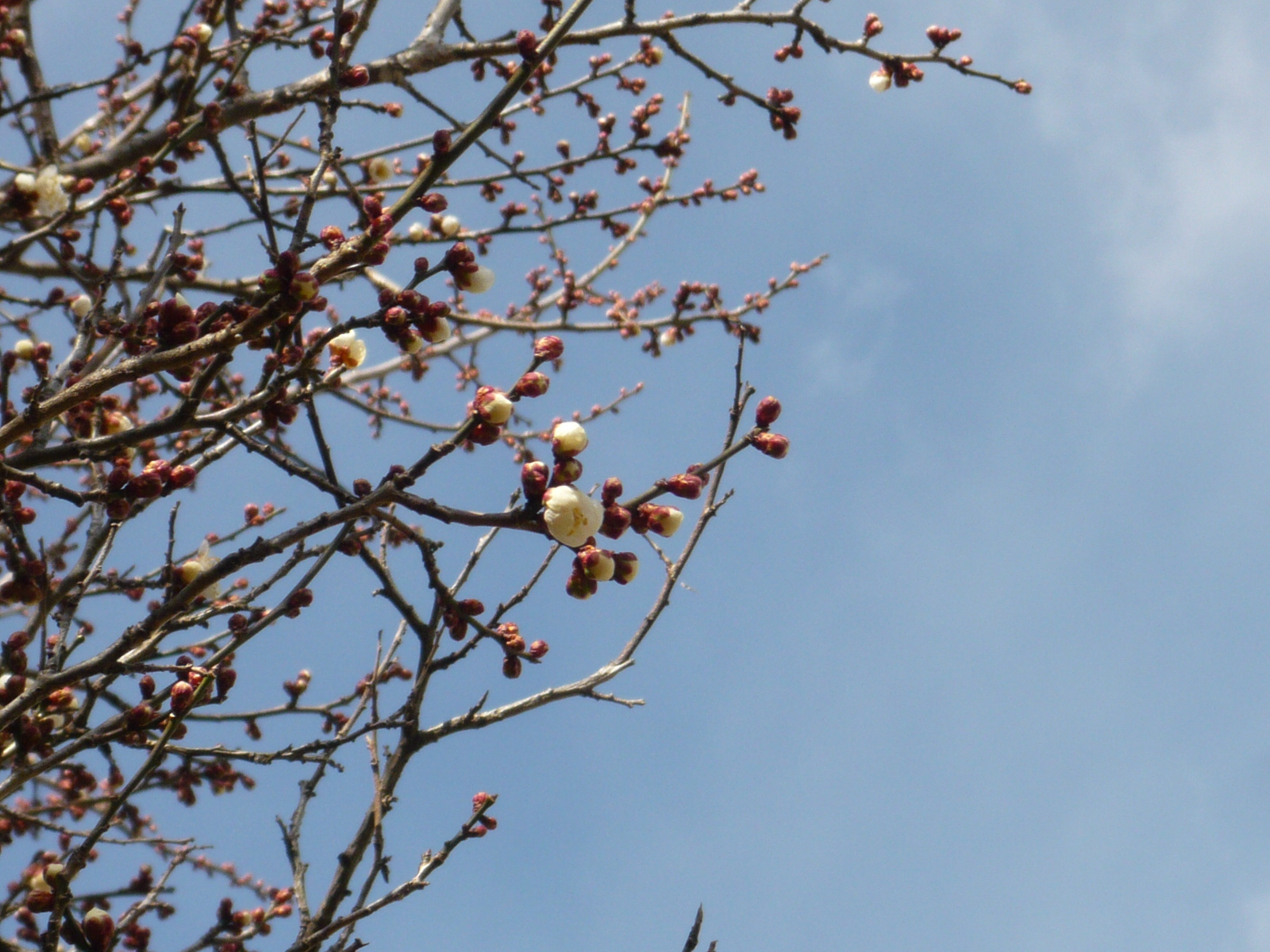 春に向かって